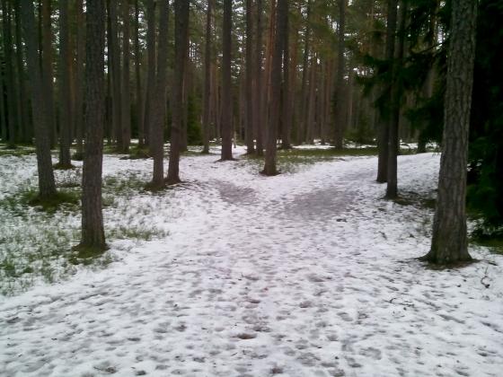 Uppe i skogen bakom sanatoriet