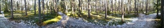 Panorama från skogen bakom sanatoriet